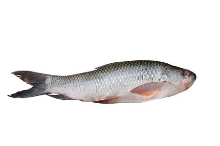 Rohu fish isolated on white Stock Photo