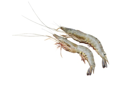 Prawn fish isolated on white  Stock Photo - 15661062
