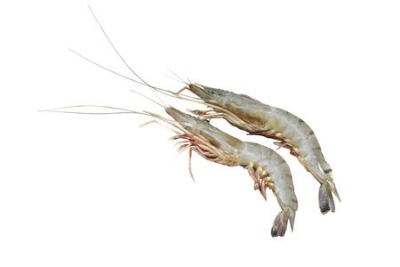 rou: Prawn fish isolated on white