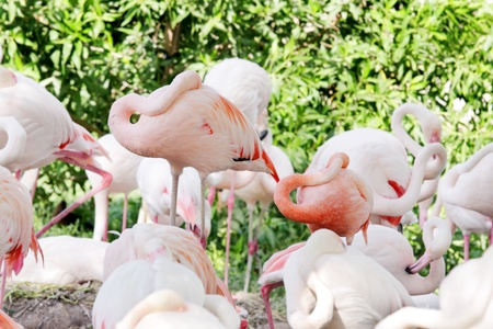high metabolic rate: Sleeping Flamingos