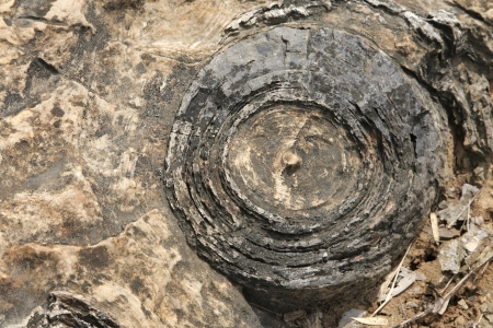 Distinct layers visible in a Stromatolite, Salkhan fossil park, India
