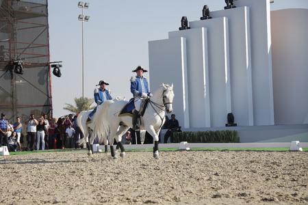 lipizzaner: Sakhir, Bahrain- 26 Nov 2010: The world famous Lipizzaner Stallions performs in Bahrain animal production show 2010