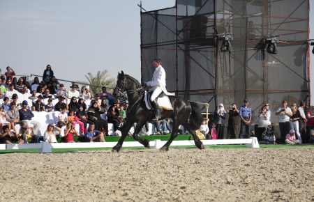 lipizzan horse: Sakhir, Bahrain- 26 Nov 2010: The world famous Lipizzaner Stallions performs in Bahrain animal production show 2010