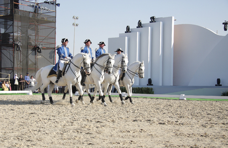 lipizzan horse: Sakhir, Bahrain- Nov 26: The world famous Lipizzaner Stallions performs in Bahrain animal production show 25-27 Nov 2010 Editorial