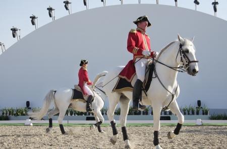 Bahrain animal 22191159-sakhir-bahrain-nov-26-the-world-famous-lipizzaner-stallions-performs-in-bahrain-animal-production-sh