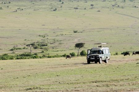 safari game drive: MASAI MARA, 21 Keyna-OTTOBRE: game drive Safari su safari furgoni con tetto aperto in Riserva Nazionale di Masai Mara (Parco Nazionale) il 21 ottobre 2013 nel Masai Mara, Kenya, Africa Editoriali