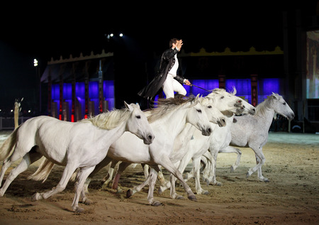 ee: SAKHIR, BAHRAIN - MARCH 22  Lorenzo, the flying Frenchman and Lusitano horses performs on March 22, 2014 in Bahrain International Endurance Village during the Bahrain Animal Production Show  Mara ee  2014