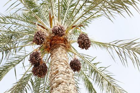 ripen: Clusters of ripen dates