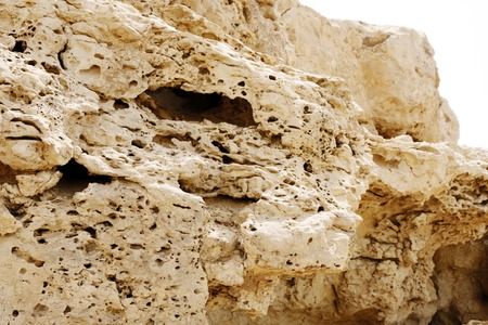 pores: Pores visible in the outcrops of weathered limestone rock