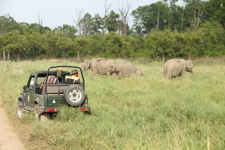 safari game drive: Jim Corbett, 23 INDIA-maggio: Una jeep Safari su game drive guardare elefante asiatico al pascolo nella prateria del Dhikala il 23 maggio 2014 a Jim Corbett, Uttrakhand, India.