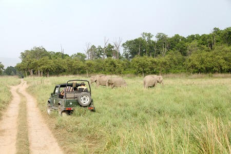 game drive: JIM CORBETT, INDIA-May 23: A Safari jeep on game drive watching Asian elephant grazing in the grassland of Dhikala on May 23, 2014 in Jim Corbett, Uttrakhand, India