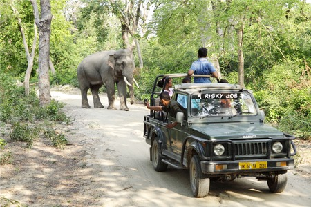 game drive: JIM CORBETT, INDIA-May 26: A Safari jeep on game drive watching Asian elephant grazing in the Jhirna forest on May 26, 2014 in Jim Corbett, Uttrakhand, India