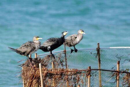 cormorants: Three cormorants resting Stock Photo