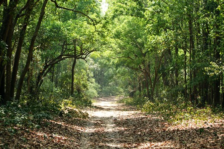 dense forest: Beautiful way through dense forest Stock Photo