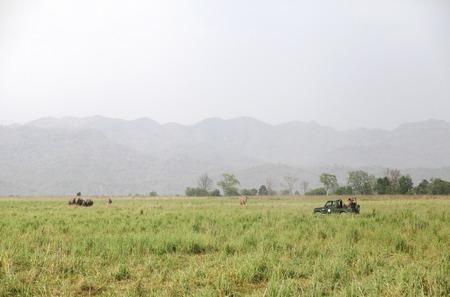 safari game drive: JIM Corbett, 23 INDIA-maggio: Una jeep Safari su game drive guardare Elefante asiatico al pascolo nella prateria del Dhikala il 23 maggio 2014 a Jim Corbett, Uttrakhand, India