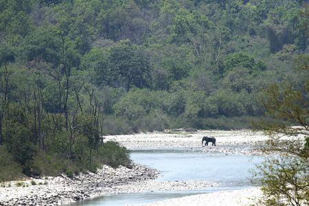 jim: The Asian elephant of Jim Corbett are called as Elephas maximus