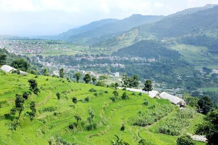 pokhara: Terrace farming in Pokhara valley