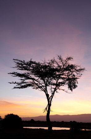 waterhole: A beautiful acacia tree and a waterhole during sunrise