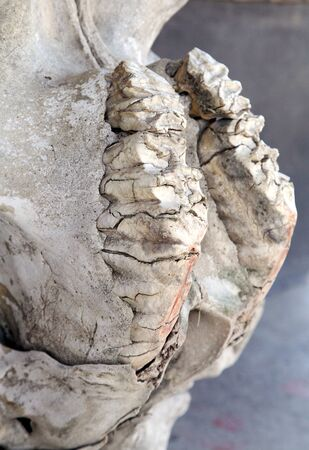 poach: Closeup of the tooth arrangement in a Rhino skull