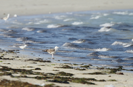 bipedal: seagulls, green weeds and waves of ocean Stock Photo