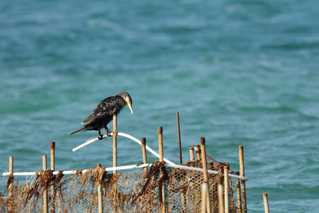 suliformes: A Cormorant resting on fishing net pipe