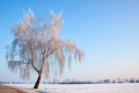 winter birch hoarfrost single road tree horizon photo