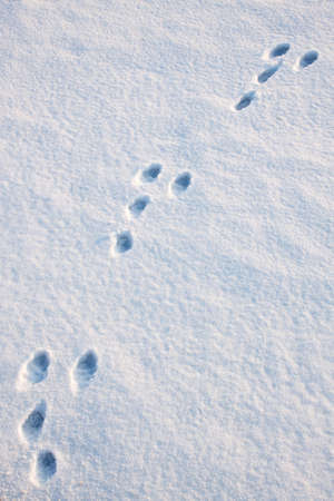 Hare trace snow three diagonal texture background photo