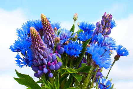 Cornflower and lupines bouquet on sky background photo