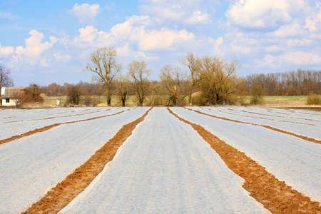 geschniegelt: Feld mit Polyethylen slick auf Dorf Bauernhof abgedeckt