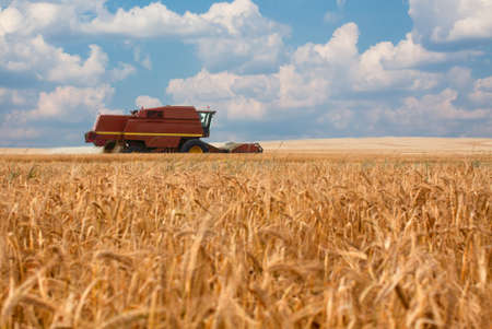 combine harvester moving on a wheat field Stock Photo
