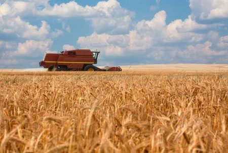 combine harvester moving on a wheat field Standard-Bild