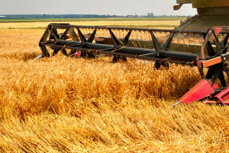 combine harvester working on a wheat field photo