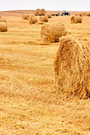 Harvested field with yellow straw bales an tractor photo