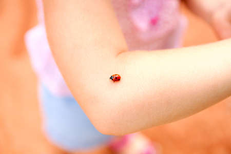 Ladybug walking on the hand of little girl photo