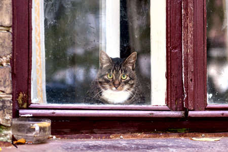Funny curious cat looks outside from window