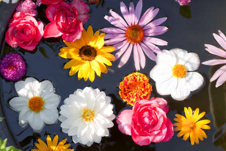 Set of different flowers floating in a pond photo