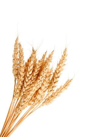 espiga de trigo: Los tallos de espigas de trigo aislado en el fondo blanco Foto de archivo