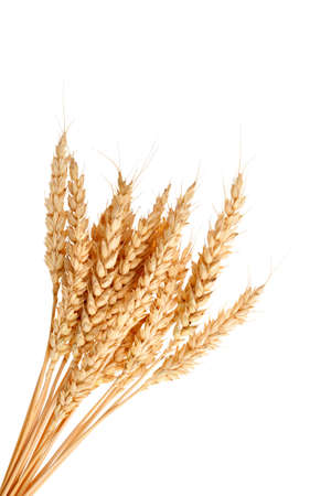whole wheat:  Stalks of wheat ears isolated on white background Stock Photo