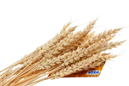 beardless: Stalks of wheat ears and credit cart isolated on white background Editorial