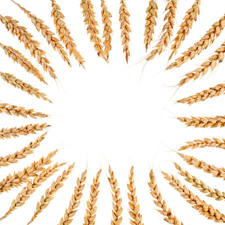 Square frame from ears of wheat isolated on white. photo