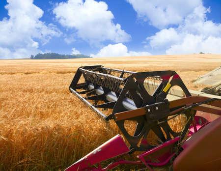 combine harvester: cosechadora trabaja en un campo de trigo