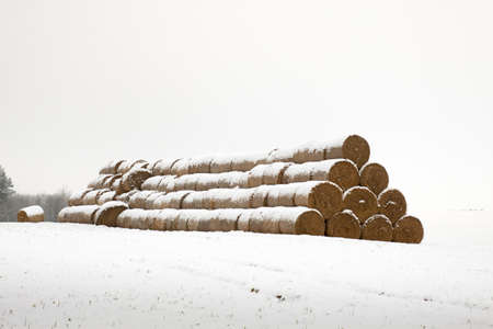 Straw Fodder Bales in Winter: straw that were left after the fall harvest are used as animal feed and bedding during the winter months Stock Photo - 17708417