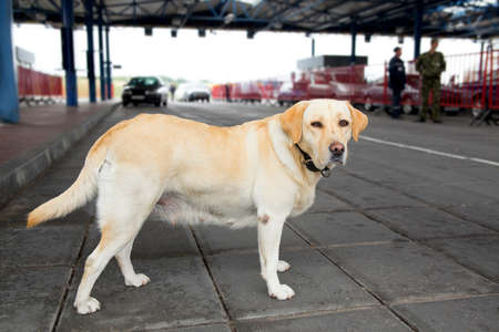 borderline: The customs dog for looking drugs and weapons on border-line Stock Photo