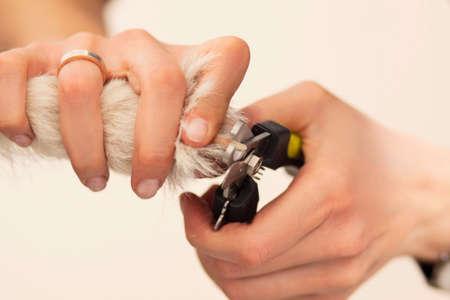 dog health: Artigli del cane sono tagliate con un utensile speciale