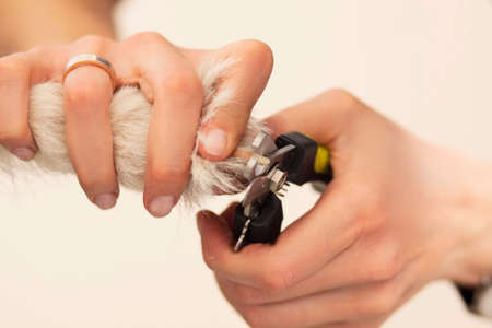 Dog claws are cut with a special tool photo