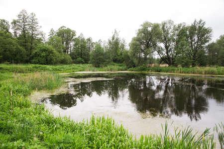 wild little pond in forest in summer photo