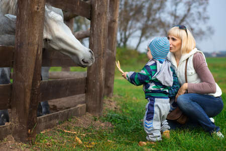 attentiveness: Mother with two-year child feed horse from hands