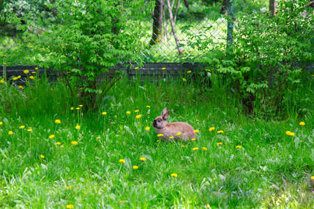 Brown and White Rabbit on Grass in Zoo photo