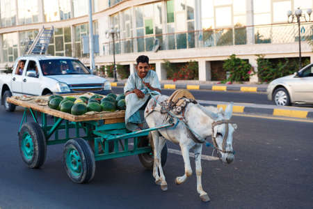 house donkey: HURGHADA EGYPT MAY 20 2015: The donkeydrawn cart with water melones on the road