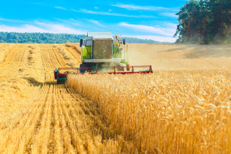 autumn harvest: combine harvester working on a wheat field Stock Photo